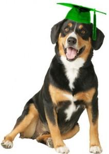 I'm Train Pawsitive Class Dog!